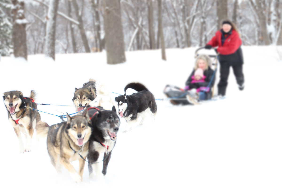 Sled dogs at Minnehaha Academy